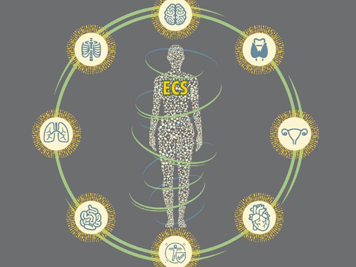 Endocannabinoid-fig-1