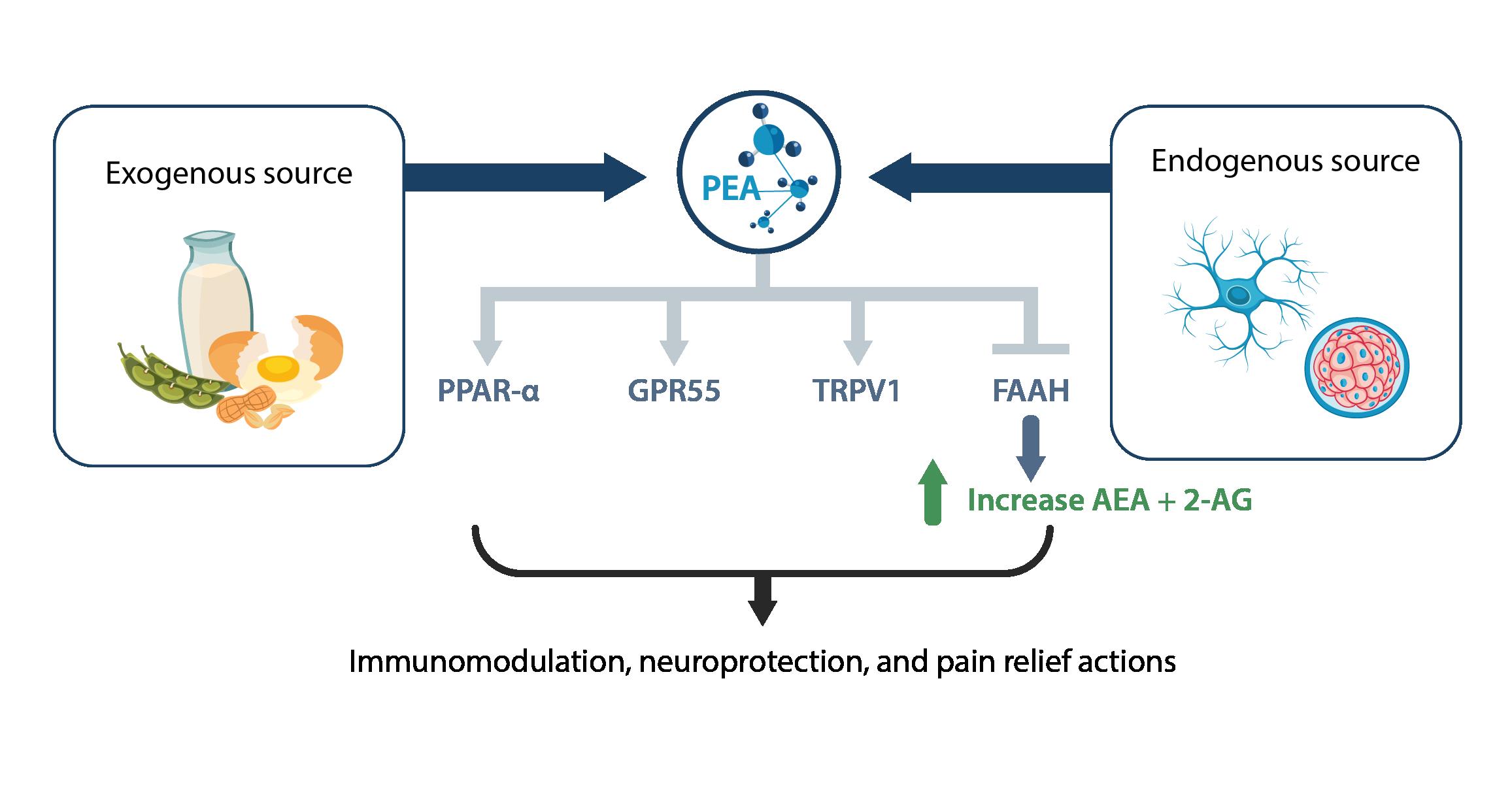 Figure1-PEA-nofig-01-1