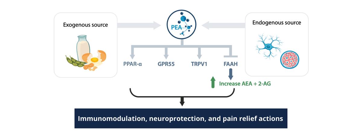 PEA-ECS-science-review